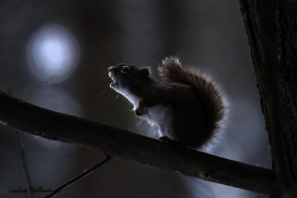Cute Animal Photography by Andre Villeneuve